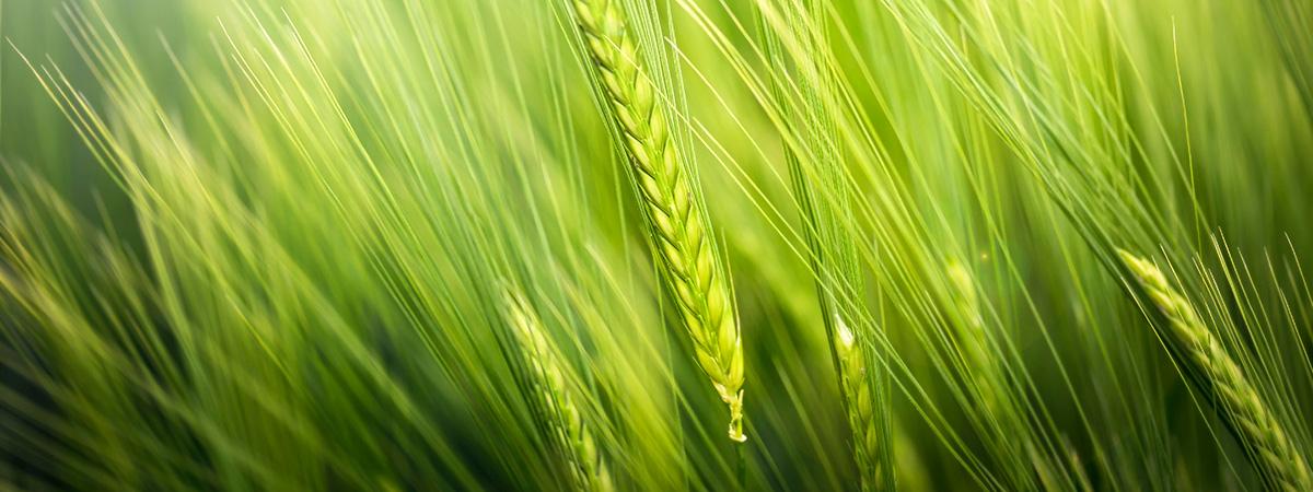 toscolapi settore biosolventi